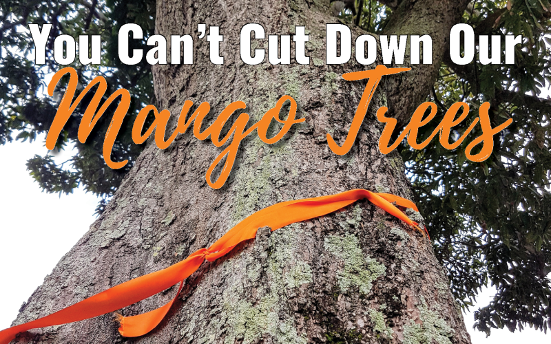 You-cant-cut-down-our-mango-trees